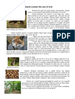 Animale Si Plante Din Zona de Deal