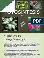 Cleizer Quiroa fotocintesis