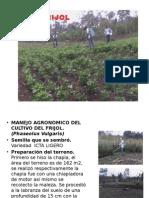 Presentación Del Cultivo de Frijol(Phaseolus Vulgaris)