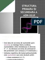 Structura Primara Și Secundara a ADN-ului