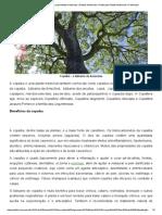Copaíba – o Bálsamo Da Amazônia