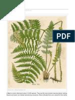 Theplantencyclopedia.org Ferns