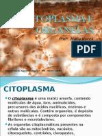 CITOPLASMA E ORGANELAS.ppt