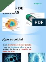 CLASES DE  CÉLULAS BLOQUE 5,2.pptx