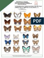 Mariposas Lycaenidae &  Riodinidae, Parque Deininger. El Salvador.C.A.
