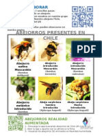 Abejorros de Chile AR