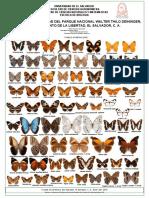 Mariposas Nymphalidae del parque Deininger de El Salvador. C.A.