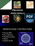 Flav i Virus
