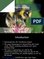 Kel. 11 Hymenoptera