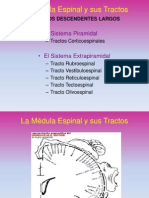 La Médula Espinal  Tractos descendentes.pdf