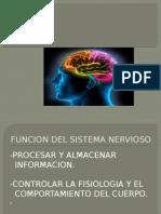 Clases de Neurolgia