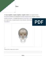 amigdala 1.odt_1