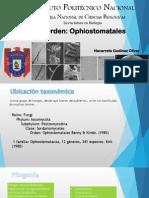 Presentación Ophiostomatales. Hongos 2015