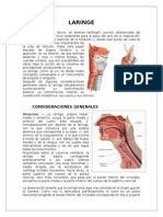 Anatomía de la Laringe