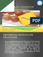 salmonella-.pptx