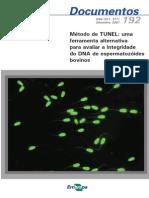 Metodo-de-TUNEL-uma-ferramenta-alternativa-para-avaliar-a-integridade-do-DNA-de-espermatozoides-bovinos.pdf
