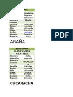 Taxonomía Pipe