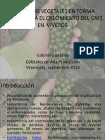 Hormonas Vegetales en El Crecimiento Del Café