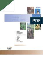 7_estrategias Territoriales Sectoriales