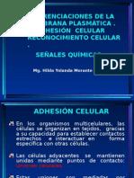 04 Adhesion Celular 2014-II