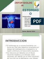 Morfofisiología del Estómago