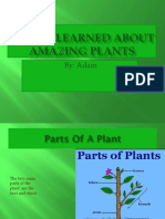 what i learned about amazing plants adam