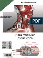 Musculos y Masticación