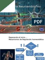 El Sistema nervioso1.14.pptx