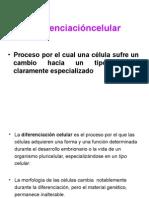 Diferenciacion Celular y Apoptosis