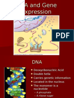 DNA and Gene Expression