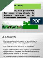Presentación Ciclo Del Carbono