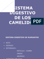 Digestion Camelidos