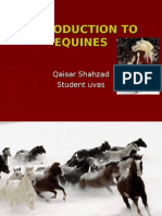 Introduction Classification, Care of Equines