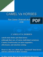 Camels vs Horses