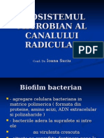 9. the Microbial Ecosystem of the Radicular Canal