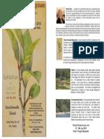 Vision Through Mangroves