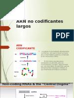 ARN No Codificantes Largos