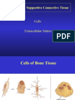 Bone Tissues