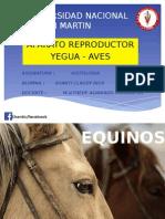 Aparato Reproductor de Yegua y Aves