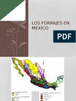 Forrajes en Mexico