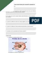 GUÍA CIENCIAS NATURALES QUINTO BASICO A.docx