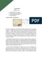 Unidad 1 El Cerebro