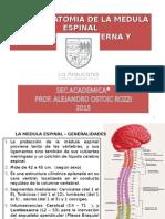 MEDULA ESPINAL - S.N.SEGMENTARIO, PPT