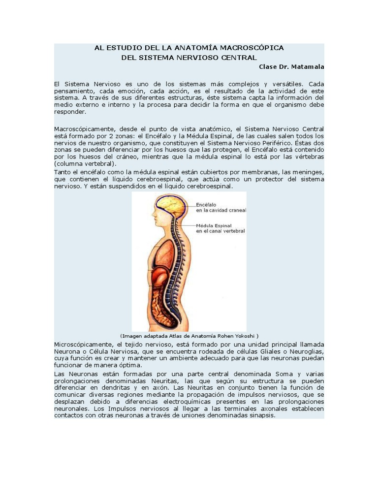 Al Estudio Del La Anatomía Macroscópica