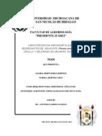 CARACTERIZACIÓN AGROMORFOLÓGICA DE SEGREGANTES DE AGUACATE (Persea americana Mill.) CRIOLLO Y MEJORADO EN URUAPAN, MICHOACÁN