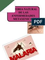 Historia Natural de La Malaria, Dengue