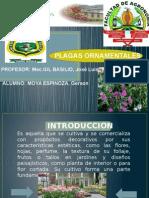 Plagas Agricolas