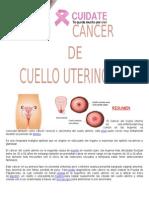 Anatomia Especializada Original