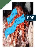 Phylum Echinodernata