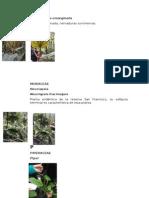 dendrologia (1)